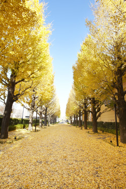 昭島市のリフォーム補助金制度について